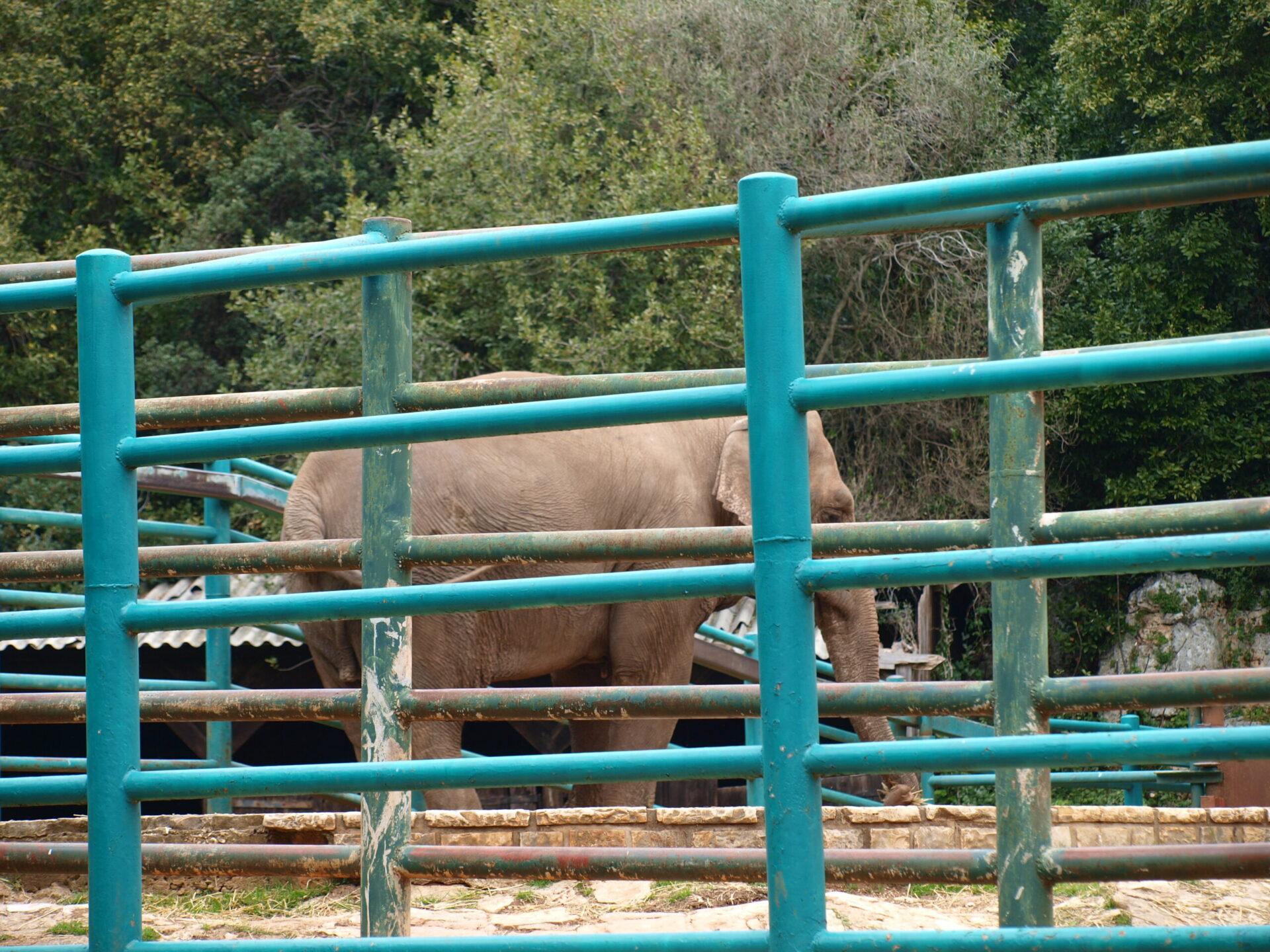 Brijuni - slonica Lanka
